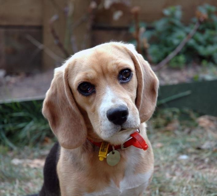 Allergies in Dogs_treat